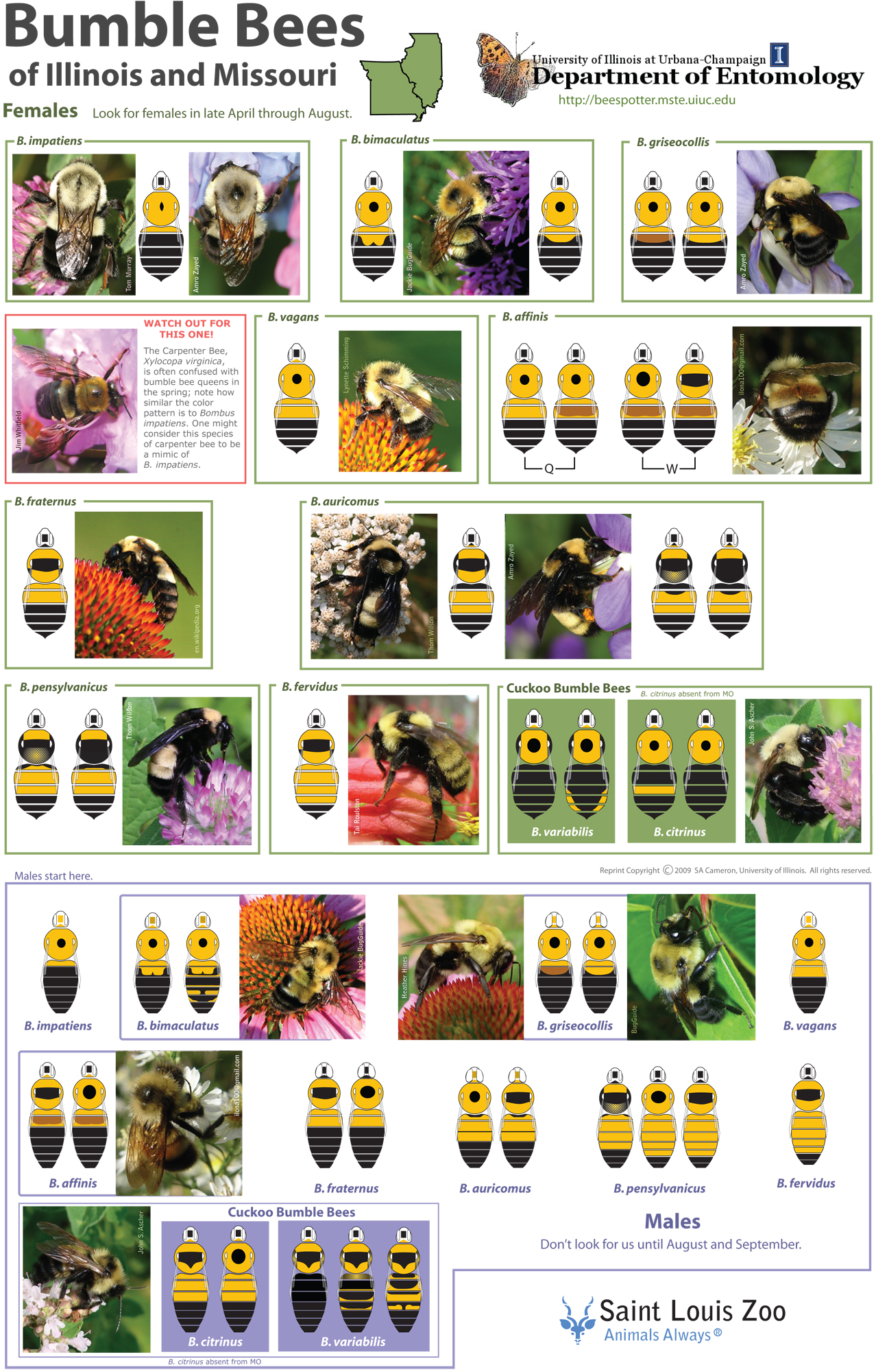 Decline and conservation of bumble bees pdf